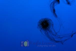 aquarium, jellyfish, boston, new england aquarium, sea life